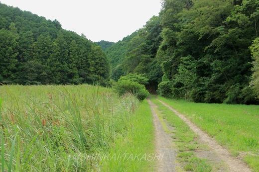 とんぼ公園IMG_7291.jpg