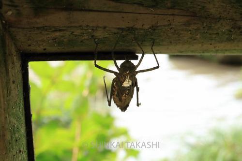 オオヤマトンボ_1431.jpg