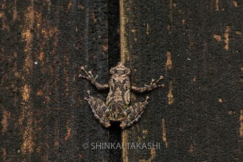 カジカ_9474-2.jpg
