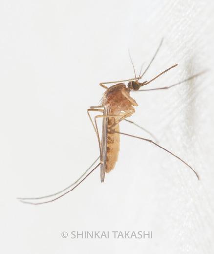 トイレの蚊-2030022.jpg