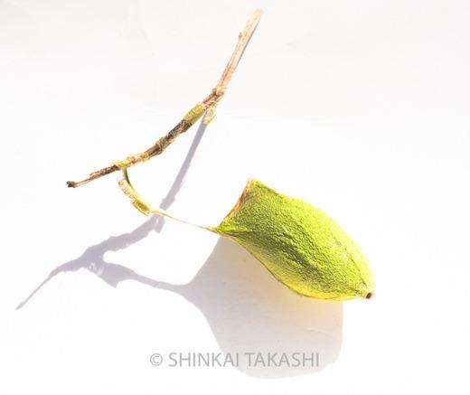 ヤマカマス-2302.jpg