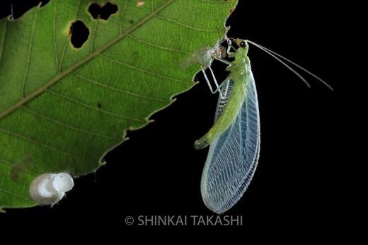 ヨツボシ_Z5A8339.jpg