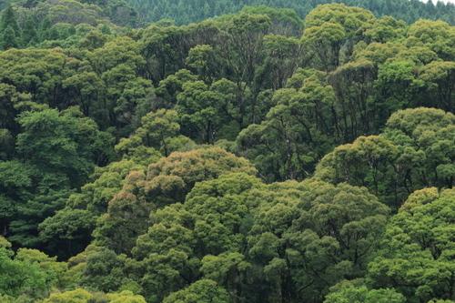 樹林_7453.JPG