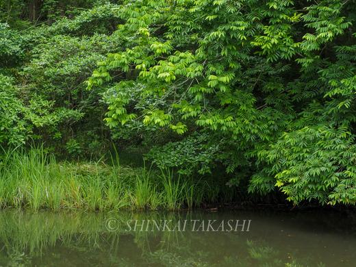 池-5260157.jpg