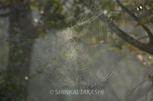 霧の朝-0988.jpg