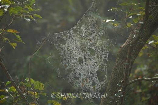 霧の朝-1003.jpg