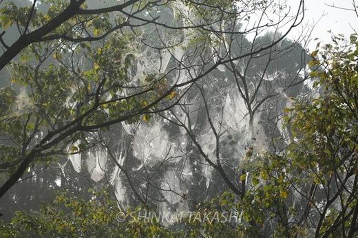 霧の朝-1007.jpg